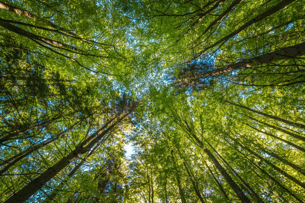 Clima, Recursos Naturales y Medio Ambiente